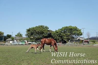 乗馬でも愛情を感じていたい