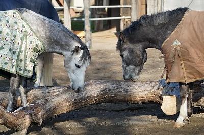 のびのびとすごしている馬達