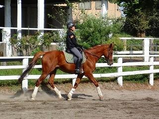 素晴らしい乗馬を体験してほしい!