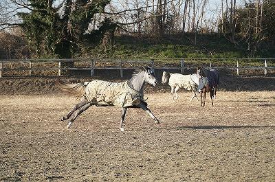 よく手をかけられた美しい馬の自然な姿