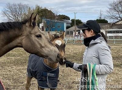 馬とパートナーになる