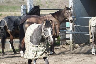 馬の表情やしぐさ