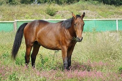 馬を幸せにする幸せ