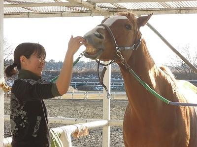 馬との楽しいコミュニケーション