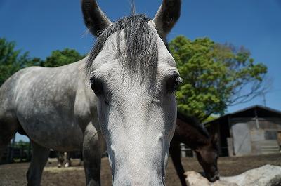 馬らしい馬