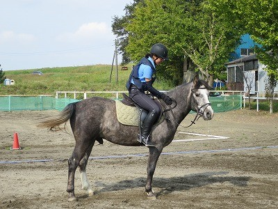 馬とハッピーコミュニケーション