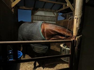 健康できれいな馬体