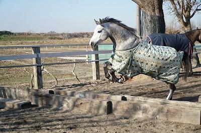 馬達の朝の放牧