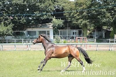 自由に走る馬