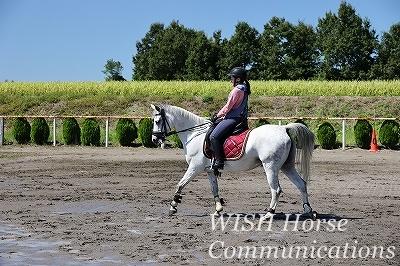 美しい乗馬