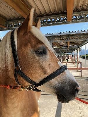 馬の健康は目の輝きに出る