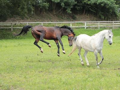 馬の喜びジャンプ!