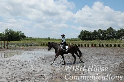 乗馬の特効薬