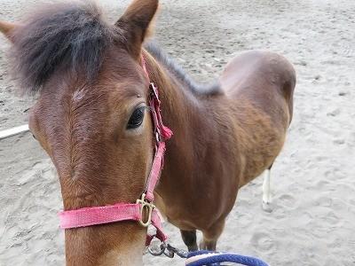 新馬調教 高さを教える