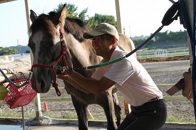 馬と信頼関係を築く