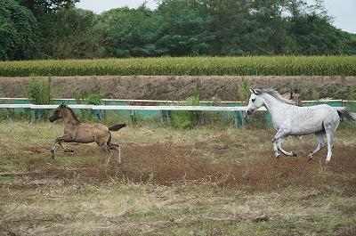 馬のために尽くすことが自分の成長になる
