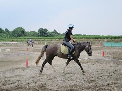 乗用馬生産