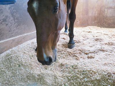 馬のふかふかおが粉
