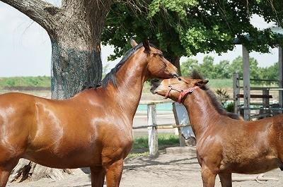 良い馬とパートナーになれる