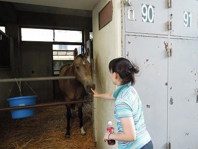 馬と愛情タッチ