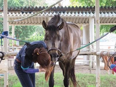 平和な乗馬
