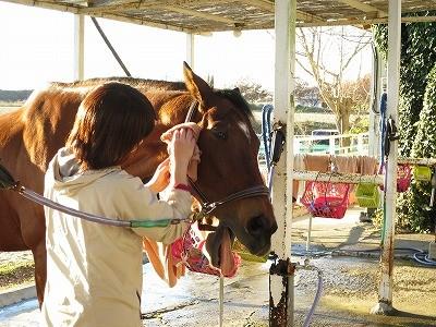 馬への思いやりが馬を育てる