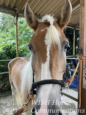 馬の行動心理学