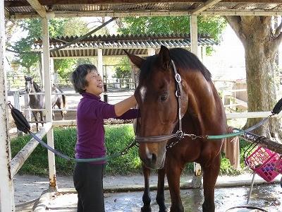 馬への愛情
