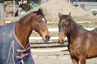 馬の人生を考える