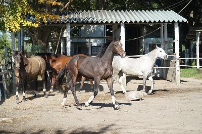 馬と共に生きる