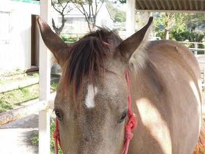 ふわふわした馬の耳