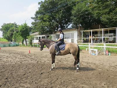 乗馬はコミュニケーションの本当の意味