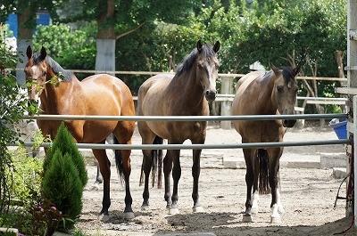馬との会話