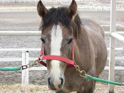 馬の手入れ方法教えます♪