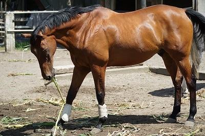 馬の毛艶を良くする