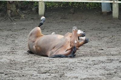 乗馬の楽しい一日