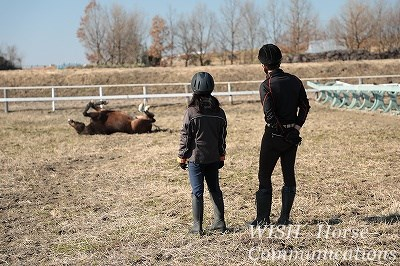 馬を見守る幸せ