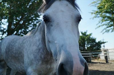 馬の気持ちと表情