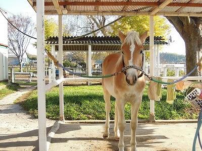 馬の銀杏もきれいです