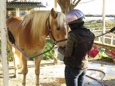 馬とのふれあいと乗馬を満喫
