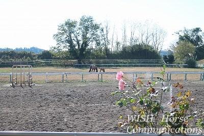 幸せな馬の放牧風景