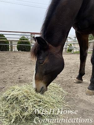 ハッピーコミュニケーション乗馬
