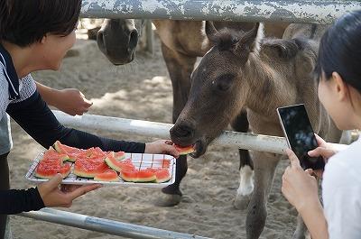 馬はスイカが大好きだから!