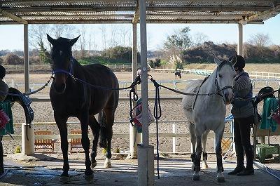 馬と自然に楽しくつきあう