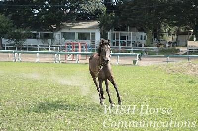 馬の意見を大切にする