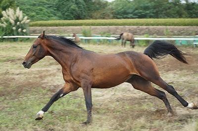 馬に絶対服従を求めるのは筋違い