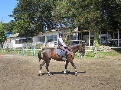馬は馬。善でも悪でもない
