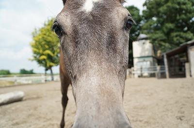 馬の気持ちはわかりやすい
