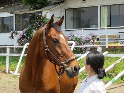 馬と人との美しい関係
