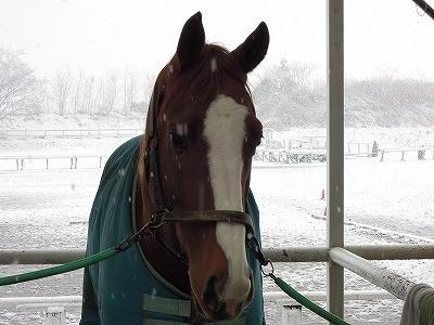 乗馬クラブの雪景色in取手